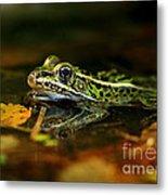 Leopard Frog Floating On Autumn Leaves Metal Print