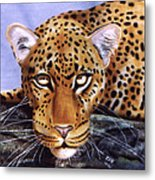 Leopard In A Tree Metal Print
