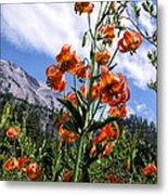 Leopard Lilies Below Lassen Peak Metal Print