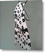 Leopard Moth Metal Print