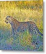 Leopard On The Prowl Metal Print