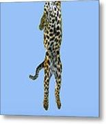 Leopard Panthera Pardus Metal Print