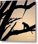 Leopard Sitting In A Tree Metal Print