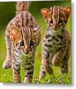 Leopard Stampede Metal Print by Ashley Vincent