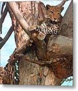 Leopard Up A Tree Metal Print