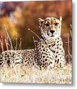 Leopard Watching Metal Print