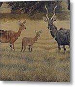 Lesser Kudu Metal Print