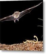 Lesser Long-nosed Bat Approaching Metal Print