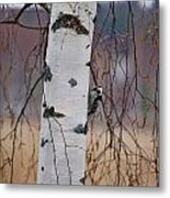 Lesser Spotted Woodpecker Metal Print