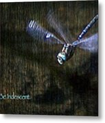 Lessons From Nature 1 - Be Iridescent Metal Print