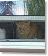 Let Me Out Cat Picture Metal Print