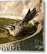 Let The Water Fly Metal Print