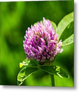Let Us Live In Clover - Featured 3 Metal Print