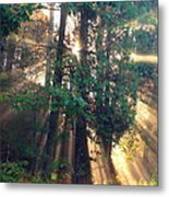 Let Your Light Shine Through Metal Print