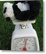 Let's Check My Weight Now Metal Print