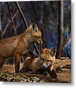 Lets Play Together Metal Print