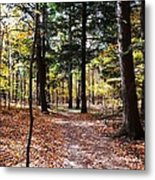 Let's Take A Walk In The Woods Metal Print