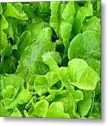 Lettuce Sing Metal Print