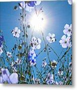 Lewis Blue Flax Backlit Metal Print