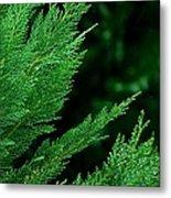 Leyland Cypress Green Metal Print