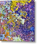 Lichen Abstract Metal Print