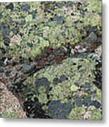 Lichen And Granite Img 6187 Metal Print