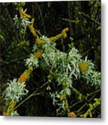 Lichen And Moss Metal Print