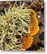 Lichen And Weed Metal Print