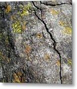 Lichen In Tricolour Metal Print