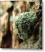 Lichen Mimic Metal Print
