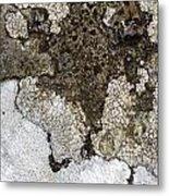 Lichen Mosaic Metal Print