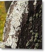 Lichen On Headstone Metal Print