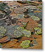 Lichens Along Trail To Plain Of Six Glaciers In Banff National Park-alberta-canada Metal Print