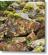 Lichens And Moss In Glen Strathfarrar Metal Print