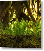 Licorice Fern Metal Print