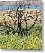 Life After Fire Metal Print