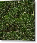 Life Grid In A Leaf Metal Print