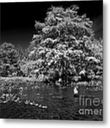 Life In The Shade Metal Print