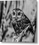 Life Is A Hoot Metal Print by Jason Brow