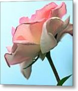 Life Is All Roses And Blue Sky Metal Print