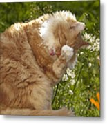 Life Is Tasty  Metal Print