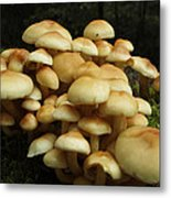 Life Of The Forest Floor Metal Print