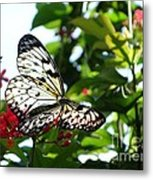Light And Butterfly Metal Print