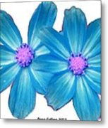 Light Blue Asters Metal Print
