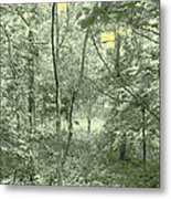 Light Forest Scene Metal Print