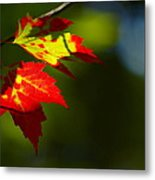 Light Gives Us All A Chance Metal Print by Aimelle