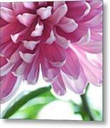Light Impression. Pink Chrysanthemum  Metal Print