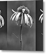 Light Of Day In Black And White Metal Print