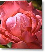 Light On Rose Metal Print