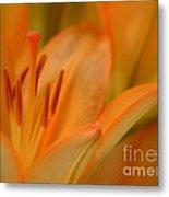 Light Orange Metal Print